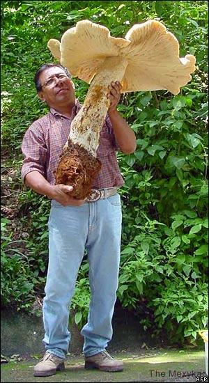 giant-mushroom